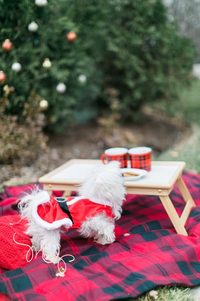 unique family christmas outdoor christmas photo ideas